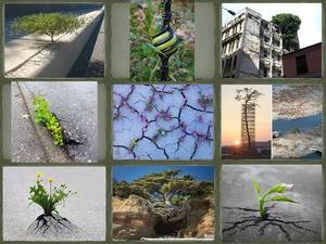 Die Natur kommt zurück