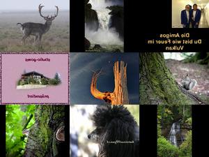 Bilder-Galerie vom 31052018 2