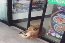 Ziemlich entspannter Hund