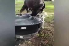 Lustige Szenen mit Pferden