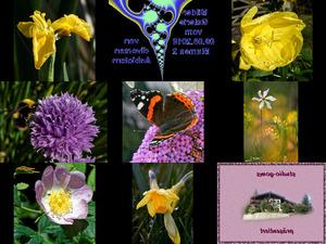 Bilder-Galerie - Blumen 2
