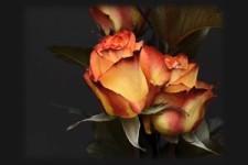 Blütenträume 02 - Blossom dreams 02