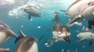 Meeresbewohner 20