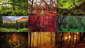 Bäume 3