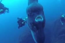 Was für ein riesiger Fisch