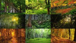 Wälder 7