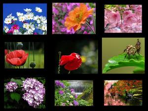 Nature Sublime Musique 22 - Natur Erhabene Musik 22