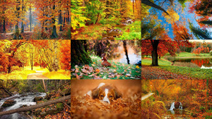 Herbst 24