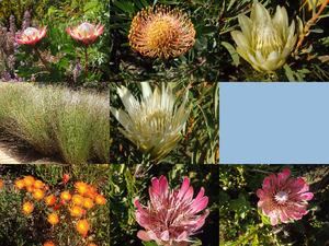 Botanischer Garten Kirstenbosch