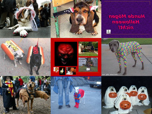 Hunde Mögen Halloween Nicht