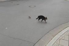 Katze flüchtet vor einer Ratte