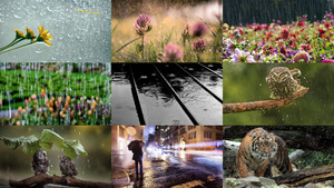 Regen 2