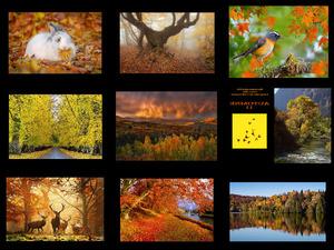 Automne Musique 11 - Herbstmusik 11