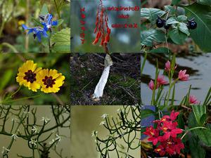 Botanische Tuin Kerkrade - Herfst - Botanischer Garten