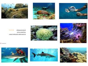 Unter Wasser 04