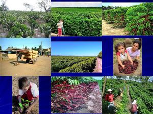 A Coffee Farm in The Brazil - Eine Kaffeefarm in Brasilien