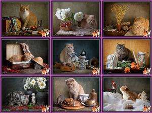 Chats Photos montages - Katzen Fotomontagen