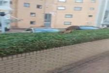 Der Fuchs und sein Gebüsch
