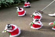 Weihnachtliche Parade