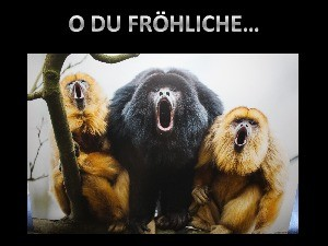 Auch Affen haben Adventsgefühle!