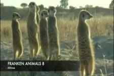 Sprechende Tiere (8)