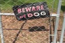 Gefährlicher Hund