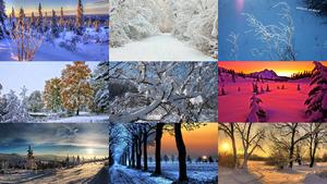 Winter 41