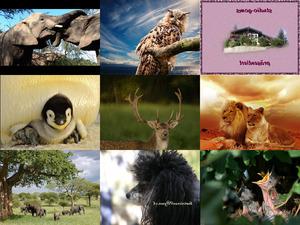 Bilder-Galerie vom 29102018 2 Tiere