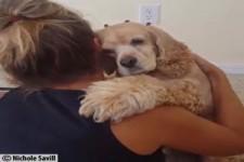 Zuneigung von Mensch und Tier