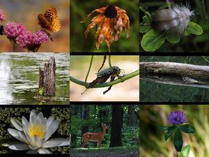 Bilder-Galerie vom 13012019 2 Natur Pur