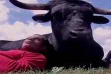Der Stier und sein FREUND