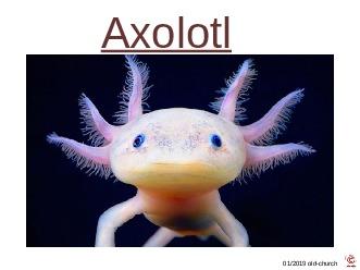 ungewöhnliche Tiere - Axolotl