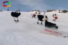 Strauße fahren Ski