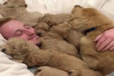 Ziemlich viele Hunde