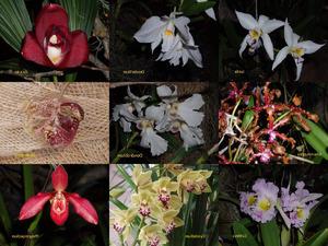 Orchideenbilder