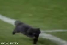 Katze spielt Fußball
