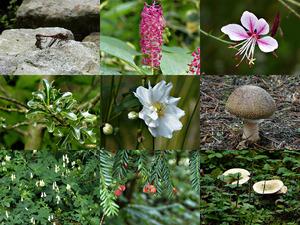 Botanische Tuin September - Botanischer Garten September