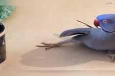gut dressierte Vögel