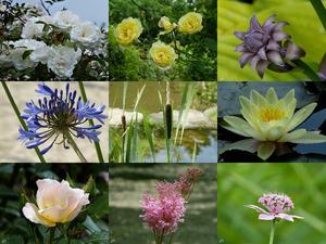 Garden of Roses - Garten der Rosen