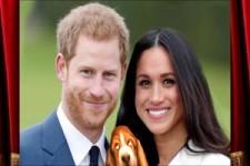 Prinz Harry - Meghan Metamorphose