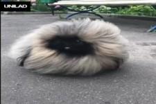 Ein Fellknaeul
