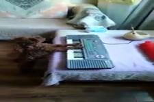 Hunde-Musik