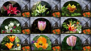 Als de lente komt - Wenn der Frühling kommt