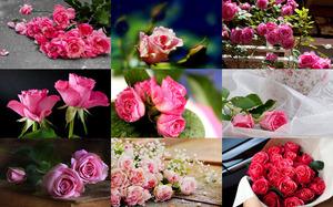 La Vie en Rose - Das Leben in Pink