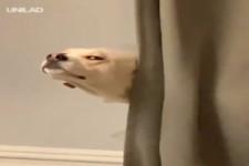 Mein Hund spielt gerne Verstecken