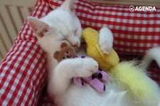 Katzenkuscheln