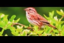 Vogelkonzert
