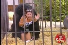 Der Gorilla Verstecke Kamera