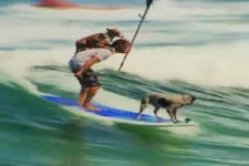 Surfen mit Hunden