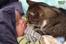 Süsse Babys und Katzen